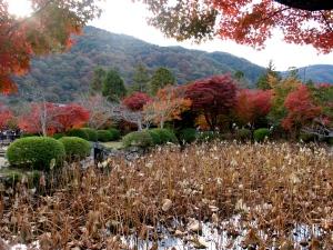 arashiyama pond